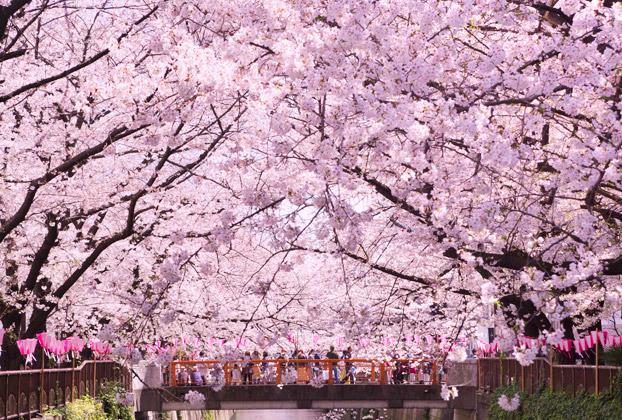 Celebrating the arrival of sakura in style